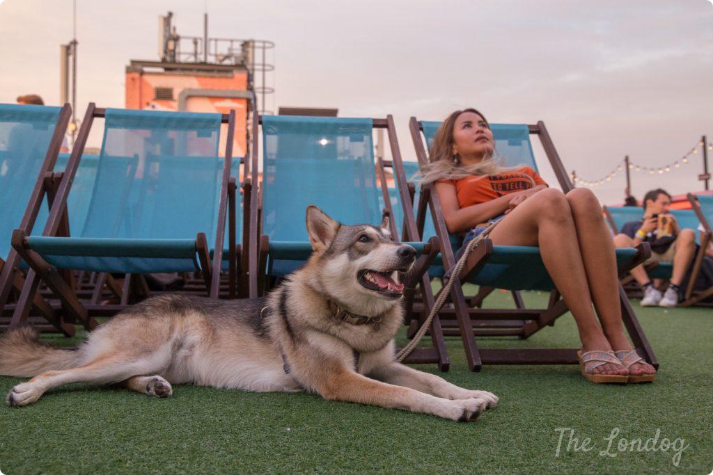 Dog-friendly cinema at Rooftop Film Club London