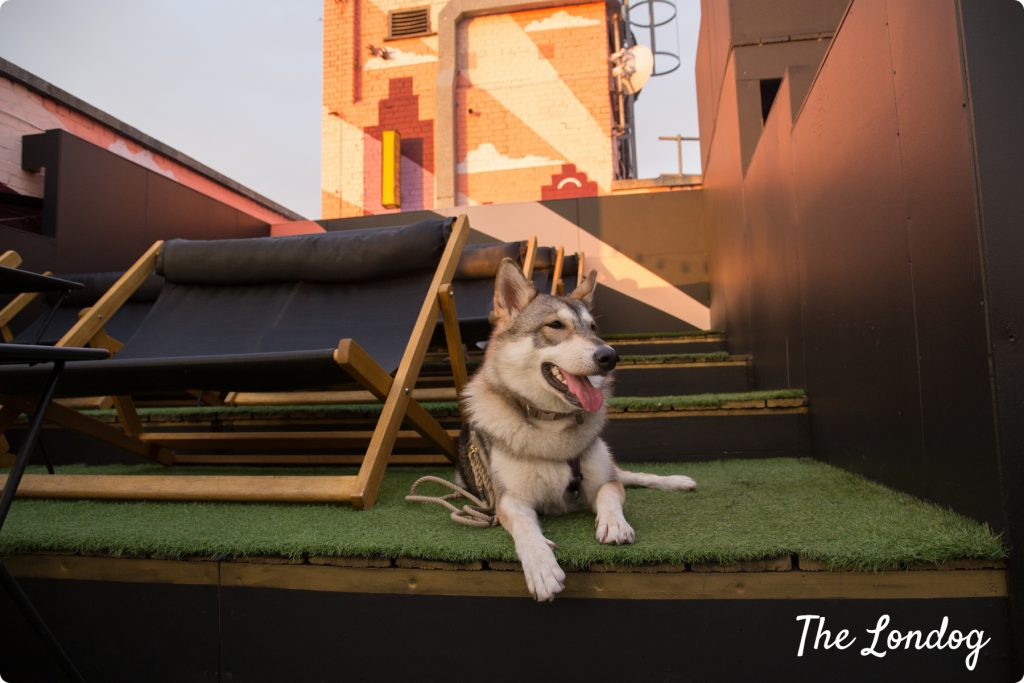 Dog-friendly rooftop cinema