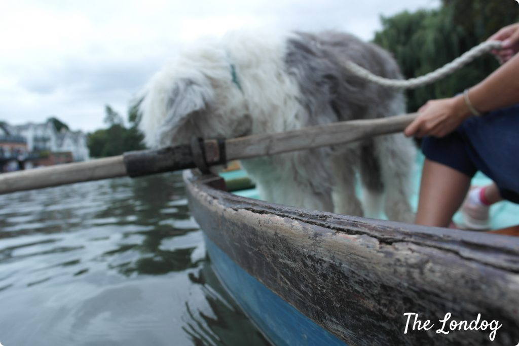 Dog on a boat in Richmond upon Thames