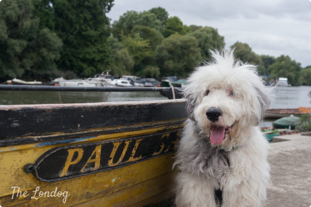 "Paul Simon the Old Sheep Dog with the boat ""Paul"""