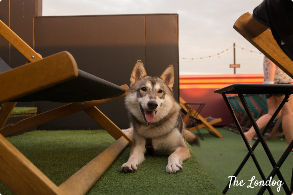 Rooftop Film Club dog-friendly
