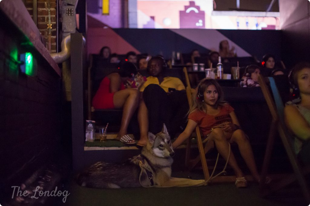 Dog at the Rooftop Film Club Bussey Building dog-friendly cinema