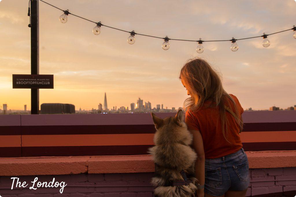 Rooftop Film Club dog-friendly