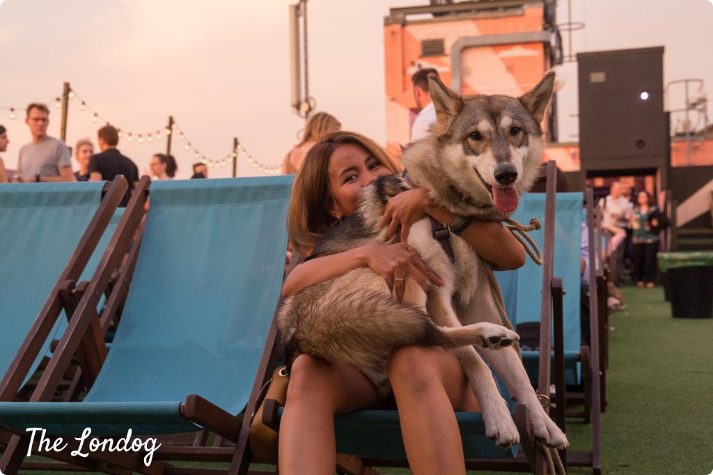 Wolf dog and owner at dog-friendly Bussey Building Rooftop Film Club cinema