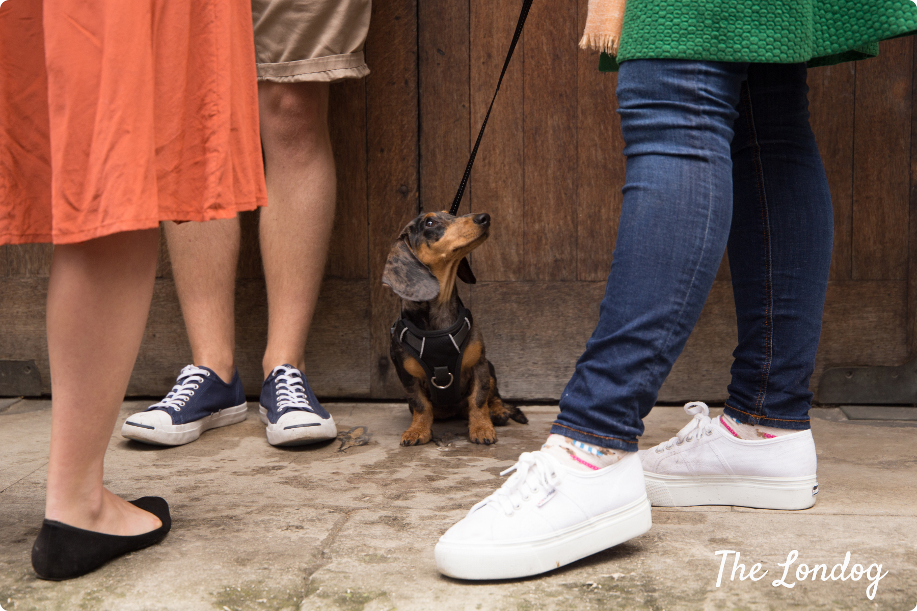 Sausage dog looking at people with colourful clothes