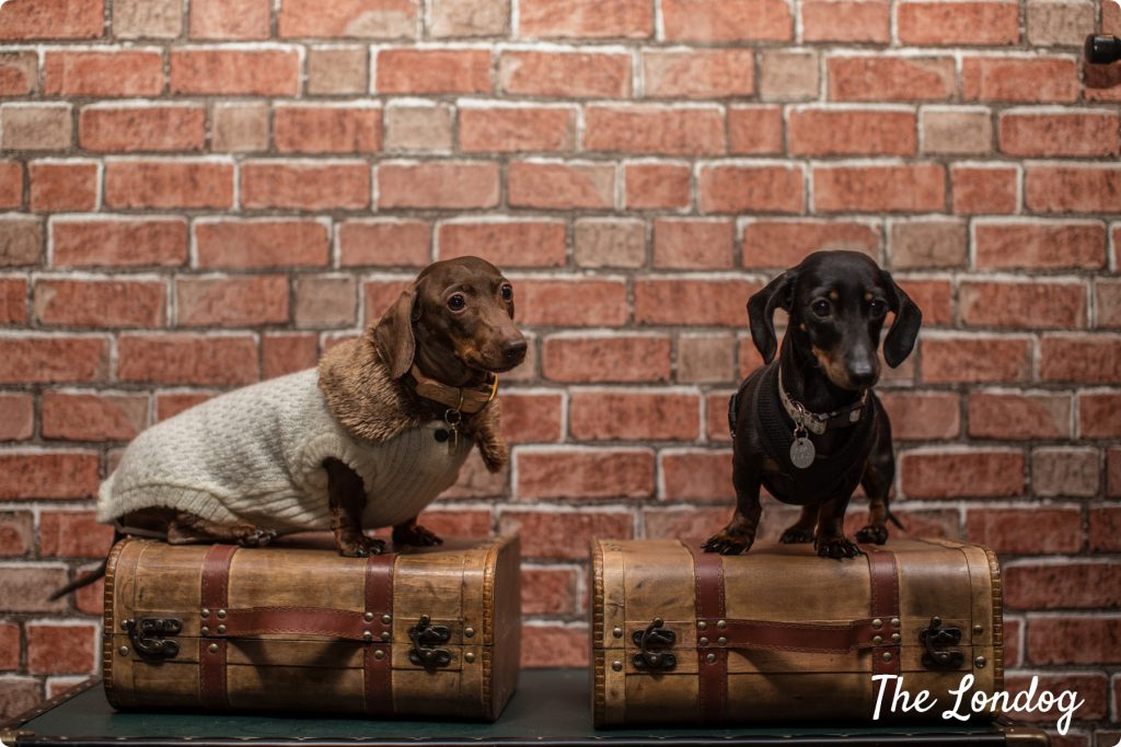Sausage dogs at The Murder Express immersive experience
