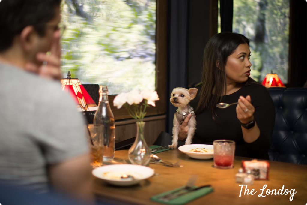 The Murder Express dog-friendly immersive experience