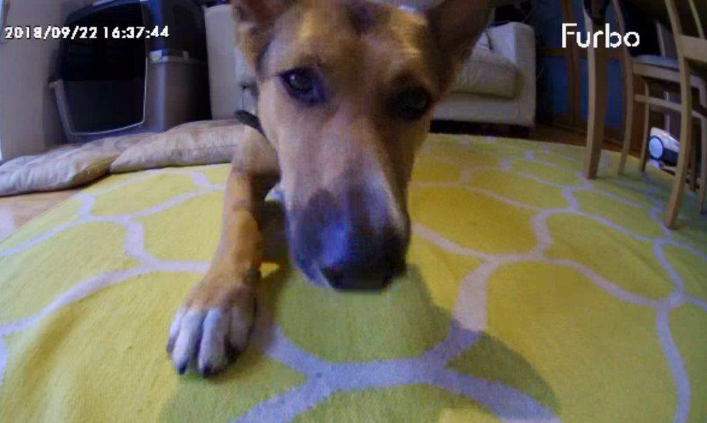 Screenshot from Furbo Dog Camera