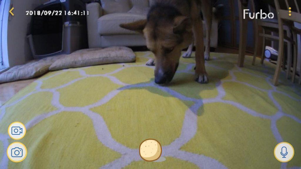 Photo from Furbo app dog with treats
