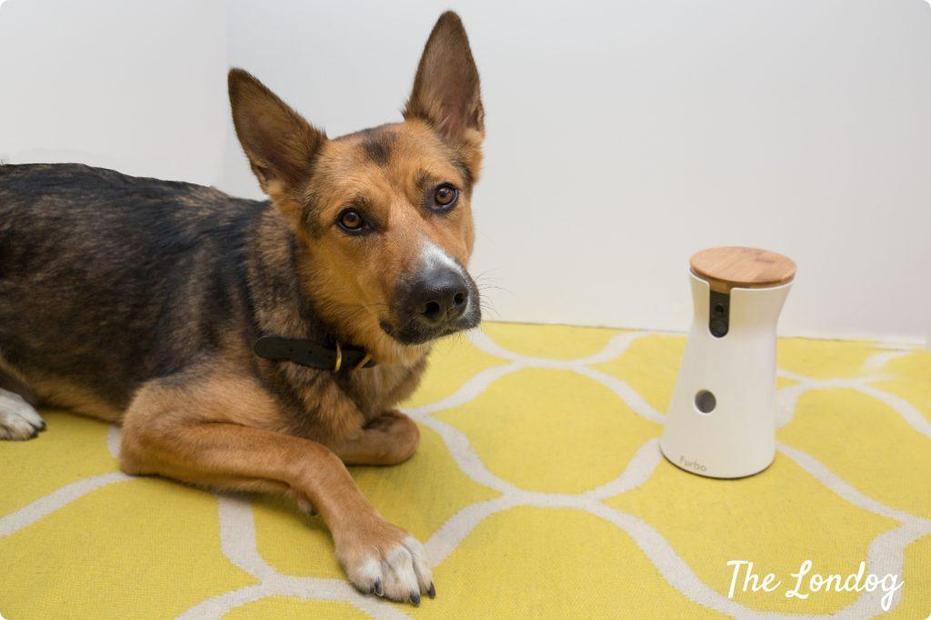 Crossbreed dog with Furbo Dog Camera