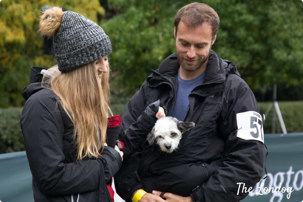 Best Rescue Chiswick House Dog Show