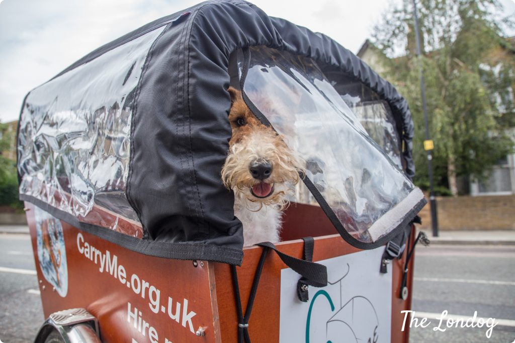 Dog on Bakfiets with rain cover