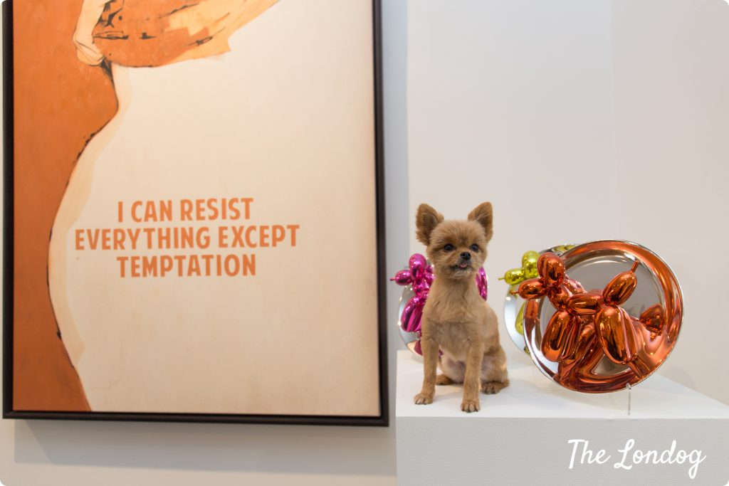 Gallery dog at Maddox Art Gallery with some artpieces
