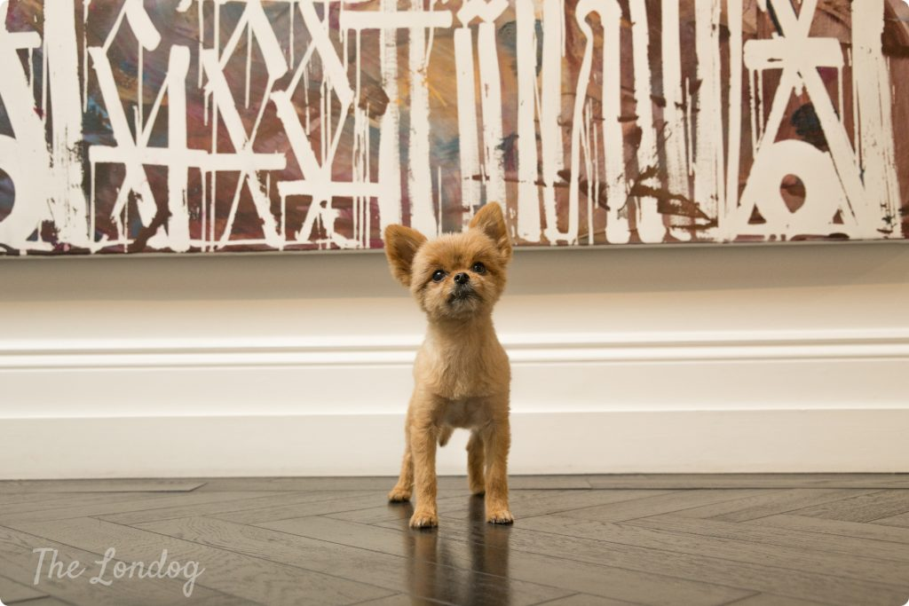 Gallery dog standing in front of artpiece