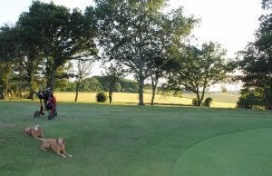 Dogs and golf clubs in the evening