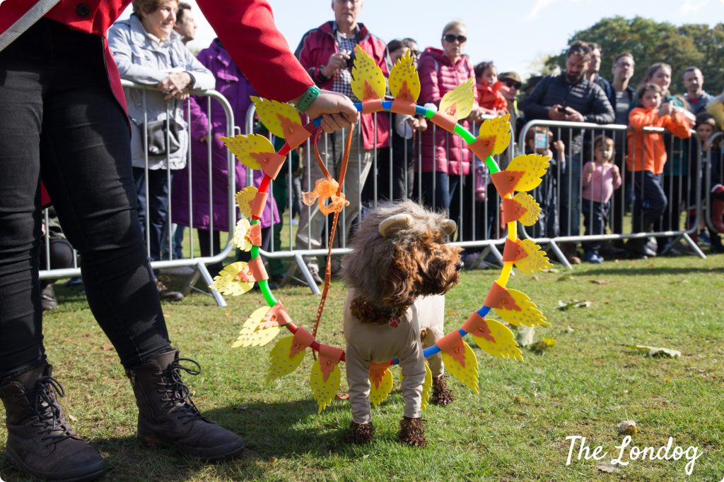 Dog dressed as lion at Chiswick House Dog Show