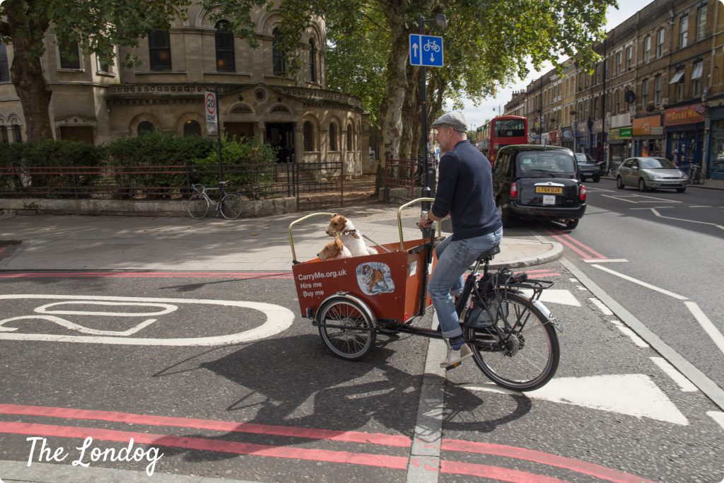 Riding in Hackney dog-friendly bike