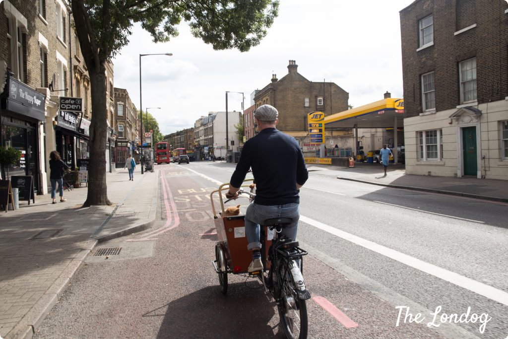 Riding with dogs in Hackney
