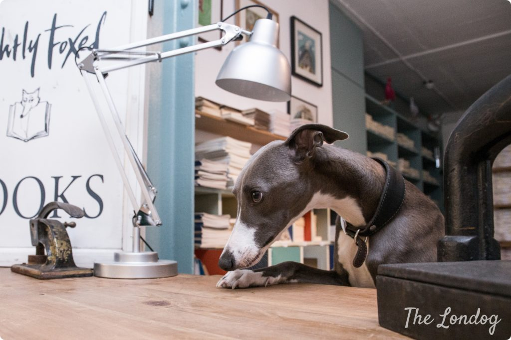Tarka office dog with lamp