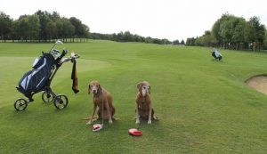Dog-friendly golf course in UK, Waterstock