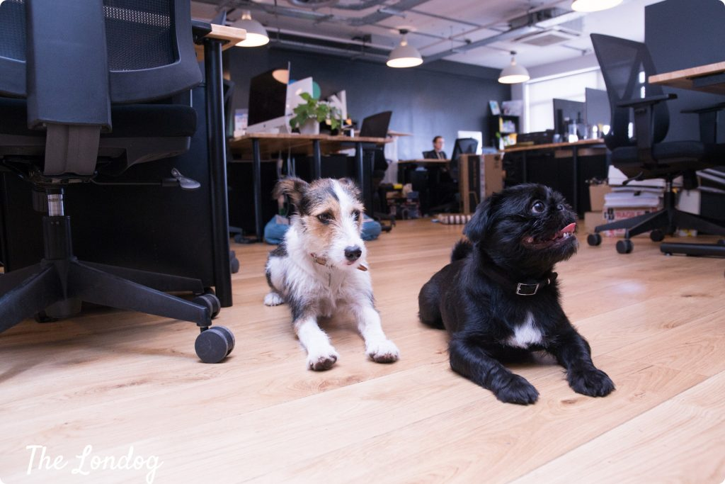 WeWork office dogs London Fields