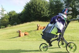 Dogs at golf course with clubs