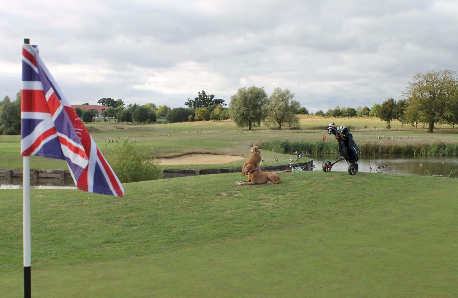 Dogs on dog-friendly golf course Wokefield Estate