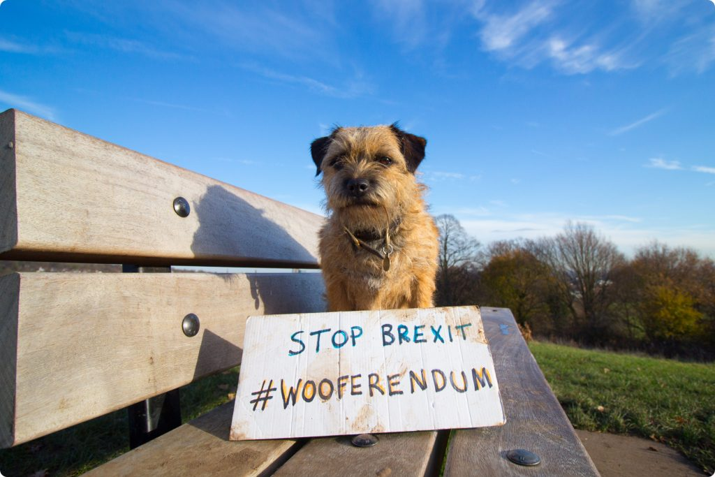 Wooferendum sign and border terrier at the park