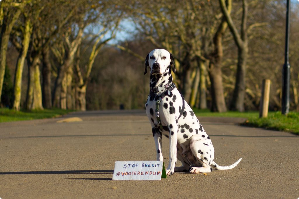 Dalmatian dog with Wooferendum sign