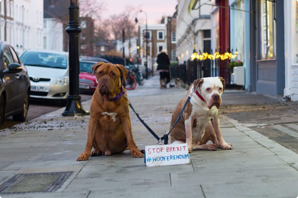 Two dogs in London with Wooferendum sign