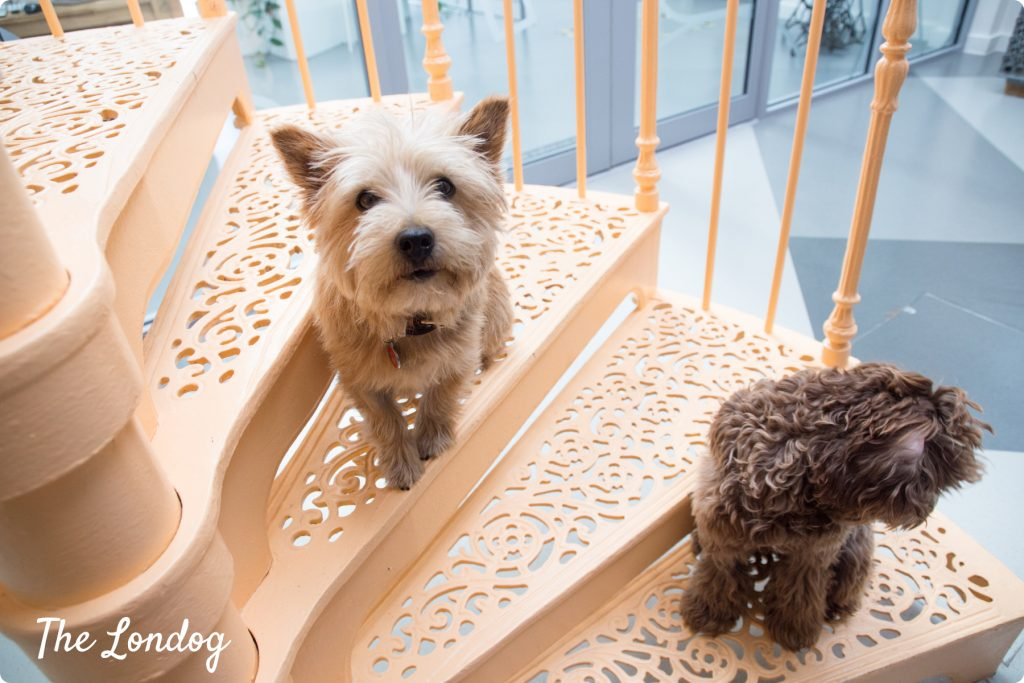 Blue and Walter dogs at Etsy on the stairs