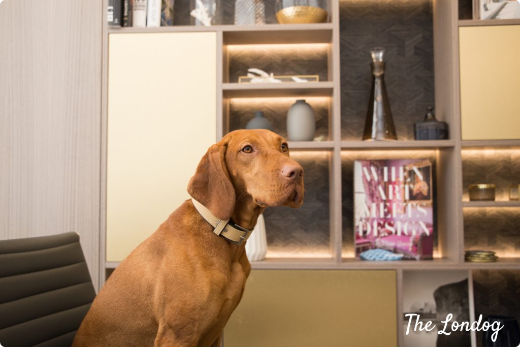 Vizla at a dog friendly interior designer office in London