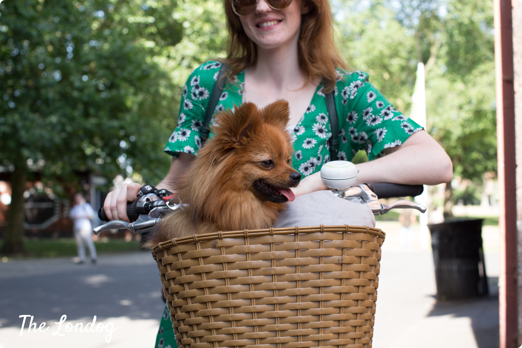 Small dog in a bike basket with his owner