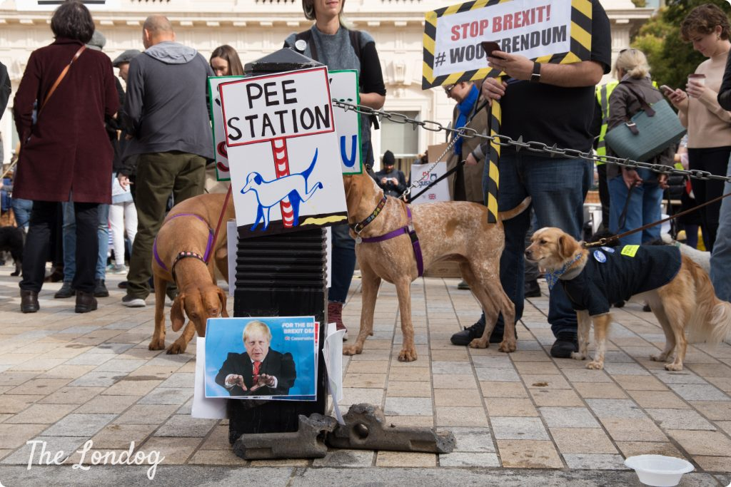 Dogs queue at the pee station at the Wooferendum march