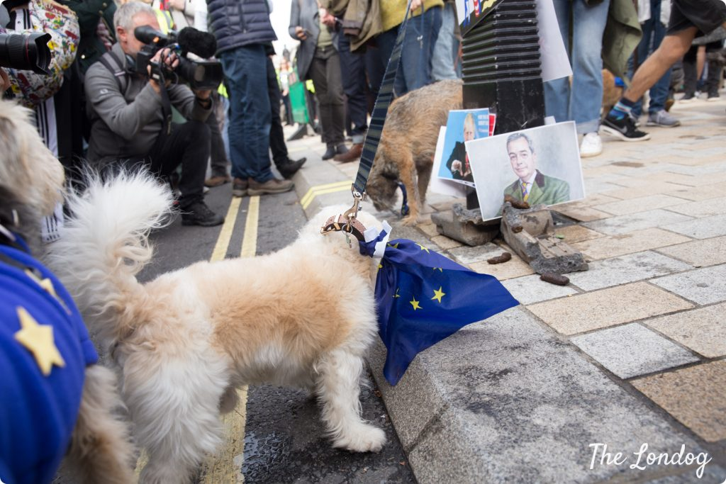 Dog culprit poos at peeing station on photo of Nigel Farage at the Wooferendum march