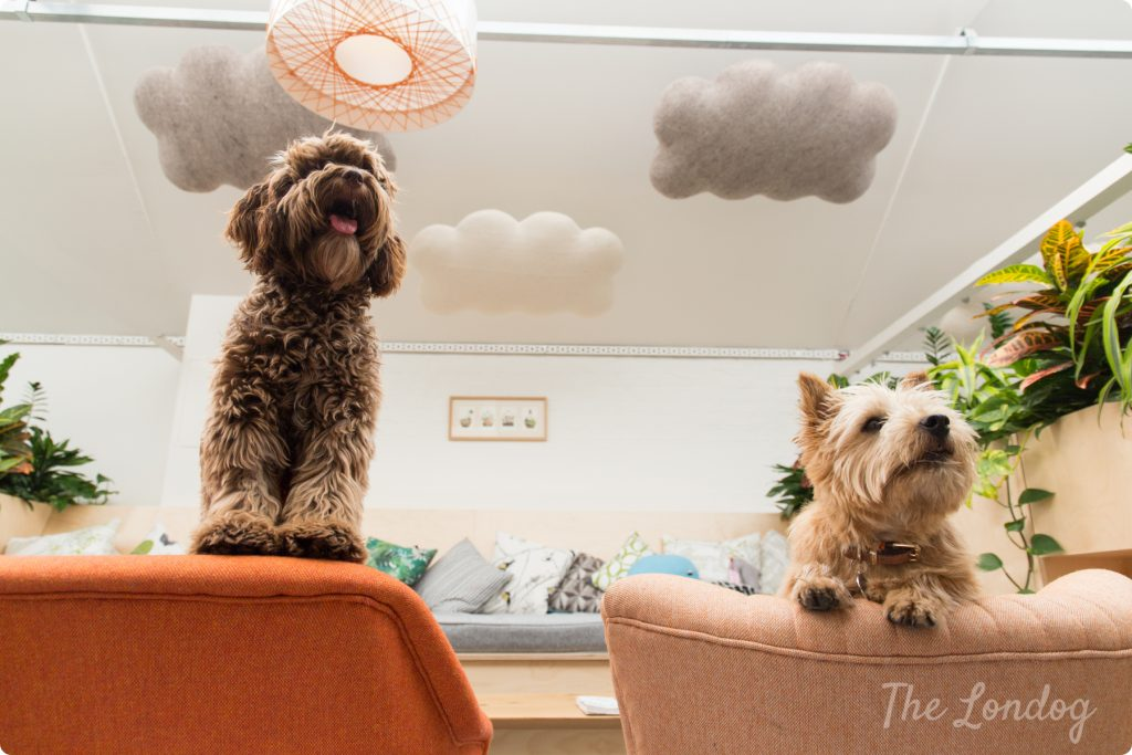 Dogs of Etsy London on chairs