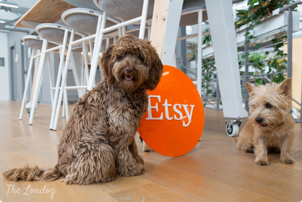 Two office dogs pose with Etsy's sign under a table