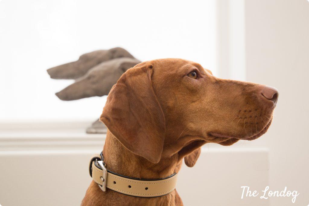 Joy office dog looks up