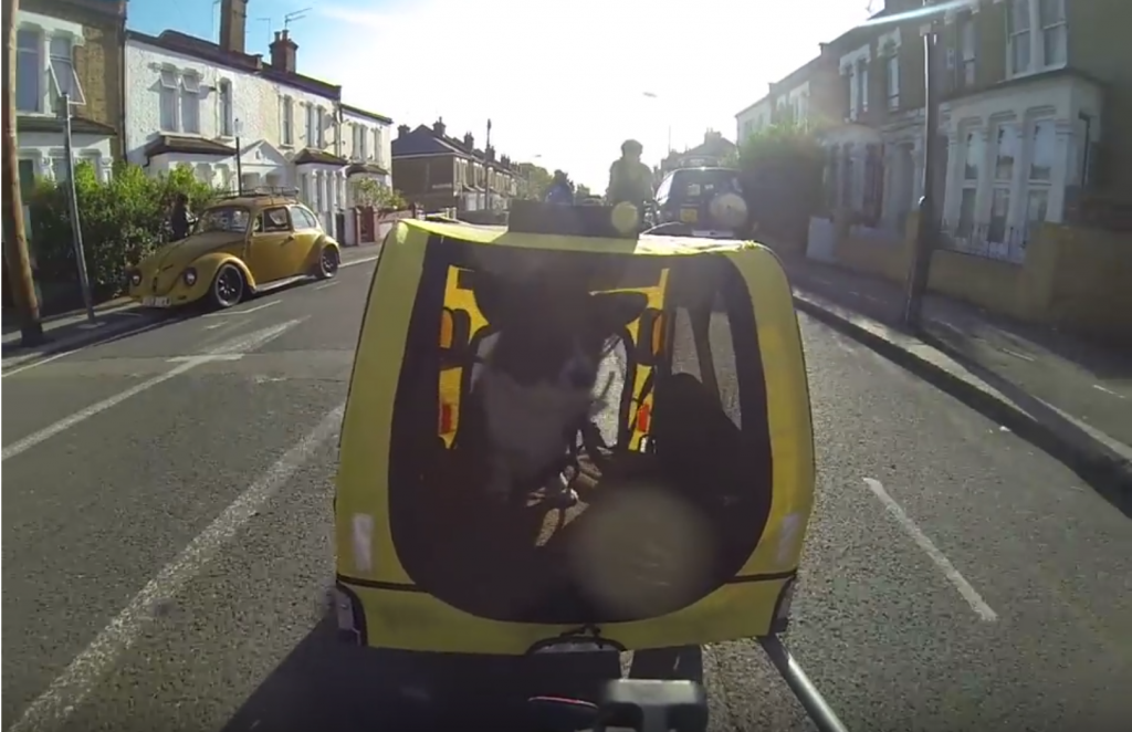 Luna the corgi rides in a bike trailer in London