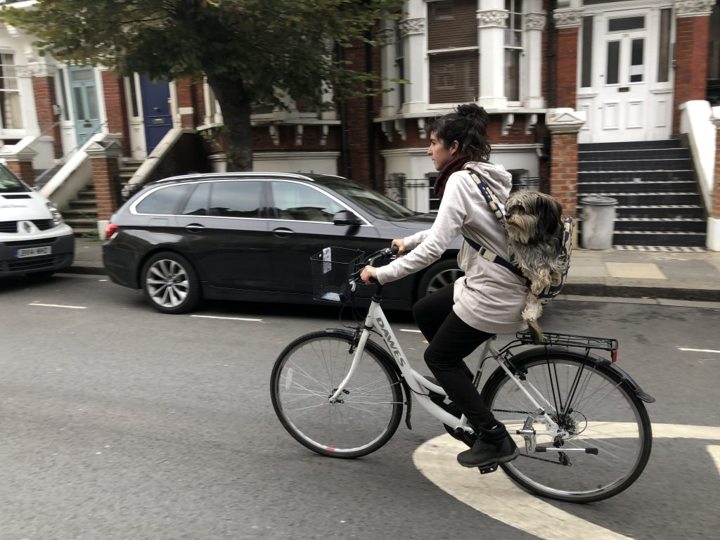 Girl and her dog carried in a baby carried on a bike