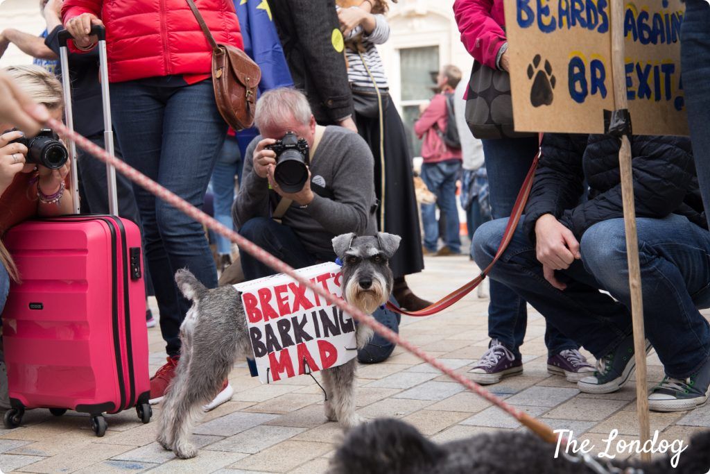 Schnauzer with anti-Brexit sign