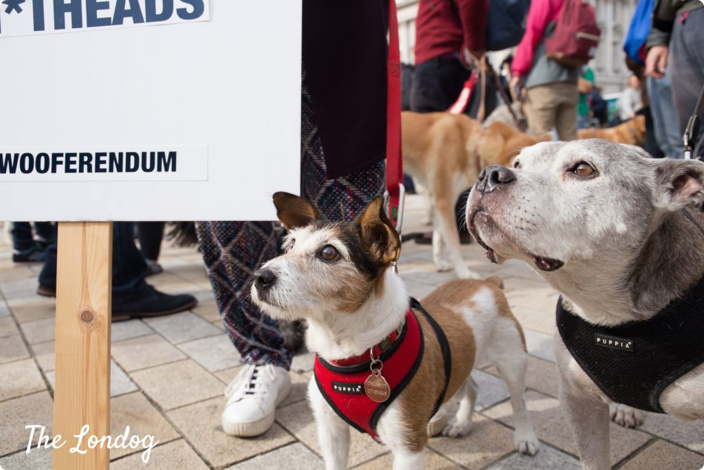 Small dog and staffie looking up with Wooferendum sign