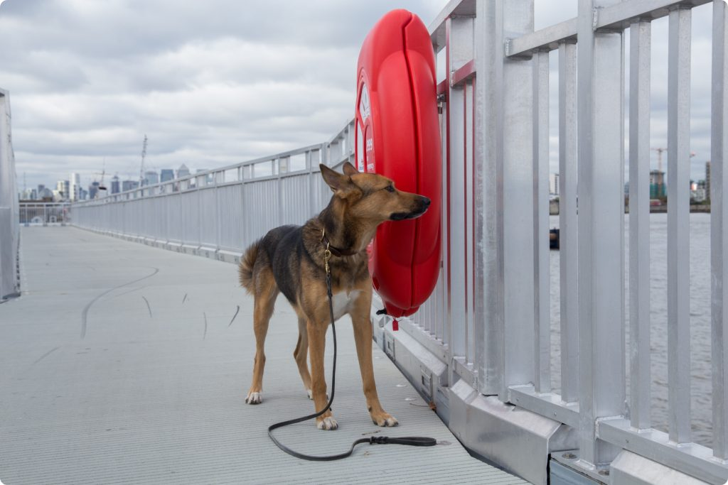 Argo the dog on Thames Path Woolwich near a red life buoy