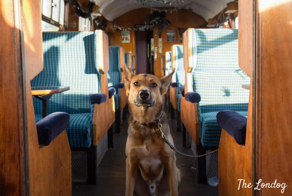 Dog-friendly Epping Ongar Railway
