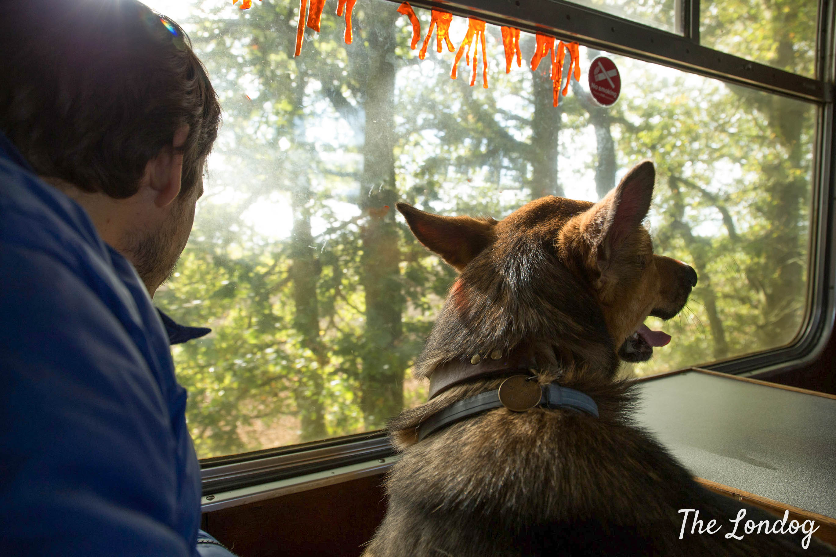 Dog looking out of the window on Epping-Ongar historic railway train