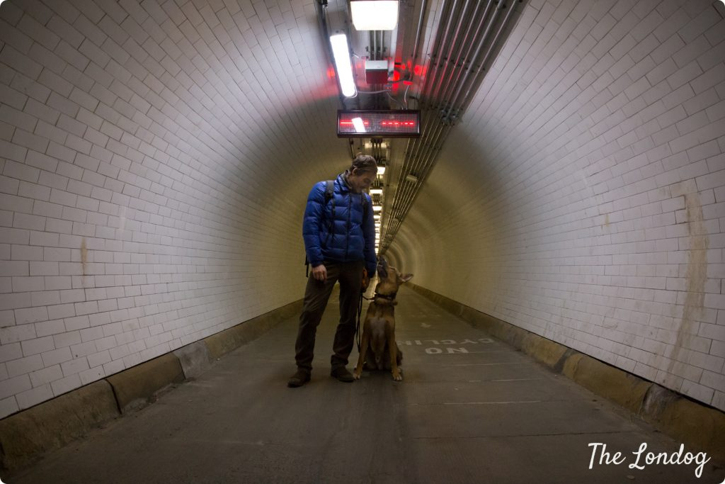Dog in Woolwich Foot Tunnel