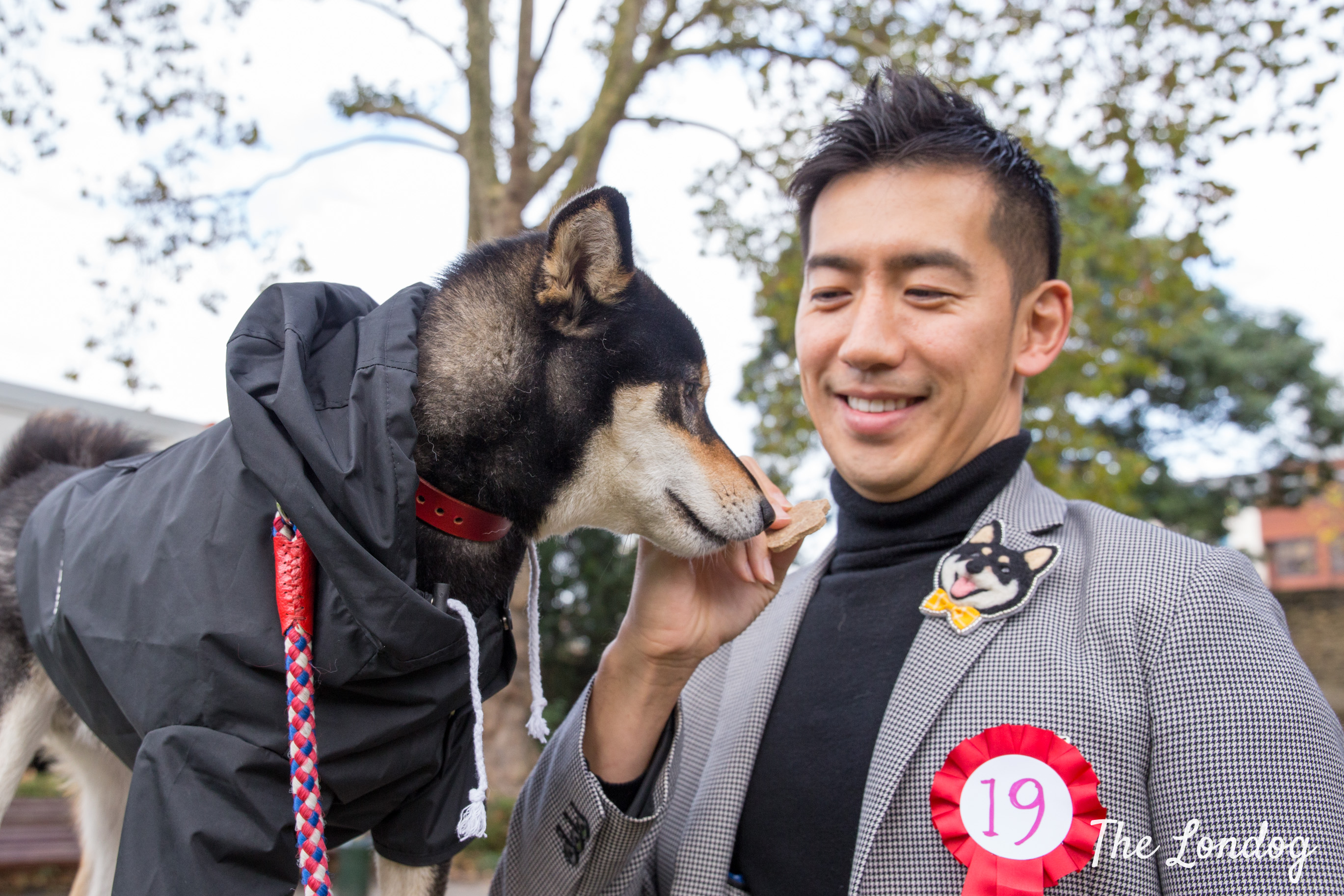 Shiba Inu looks at treat his owner, wearing a shiba inu brooch, holds in his hand before STRUZ Charity Canine Fashion Show start