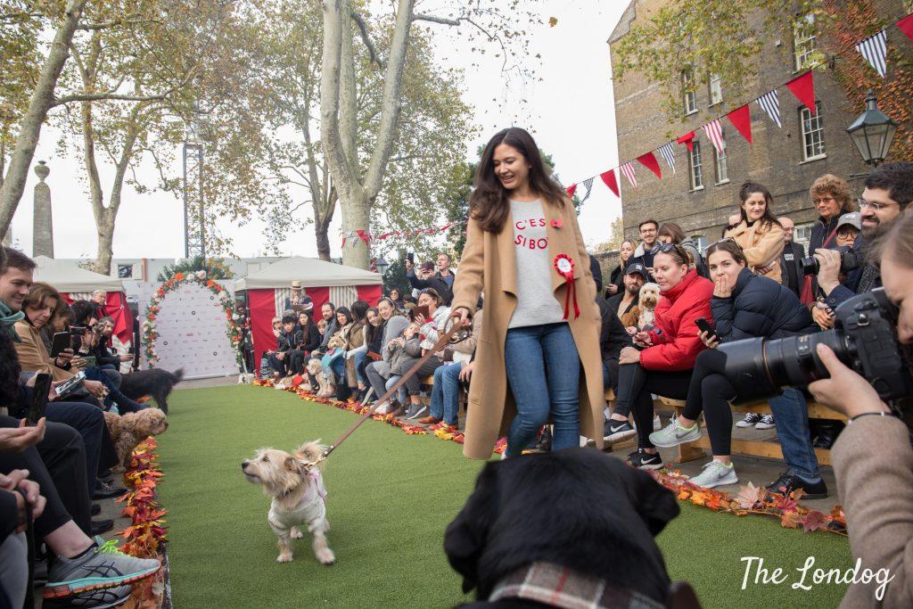 STRUZ dog catwalk