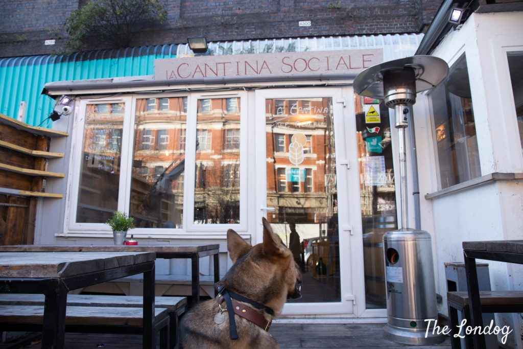 Dog outside La Cantina Sociale in East London