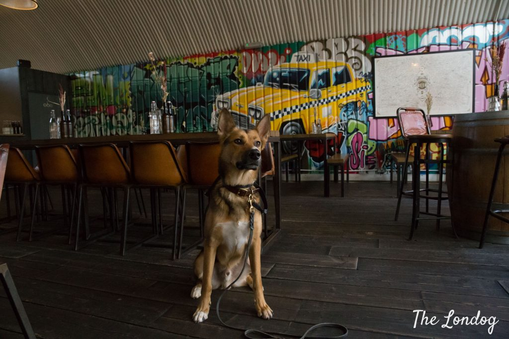 Crossbreed GSD dog at Mother Kelly's in Paradise Row, Bethnal Green, London, with colourful background